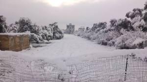 Snowy Moadamiya, Dec 2013